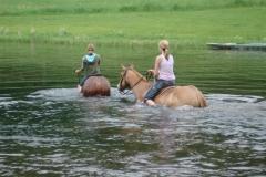 Horses-Swiming-009